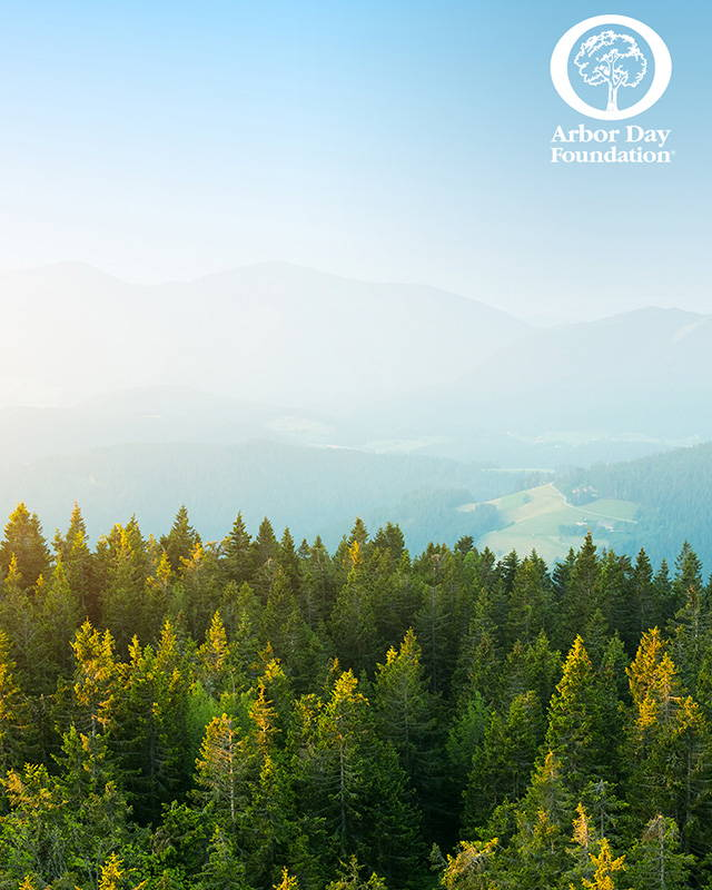 Carbon Neutrality We've Partnered with the Arbor Day Foundation