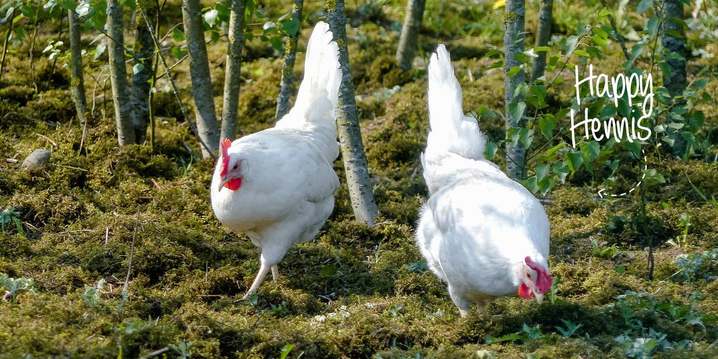 Unternehmen Pumperlgsund Eiweiß Hennen Bio Freiland