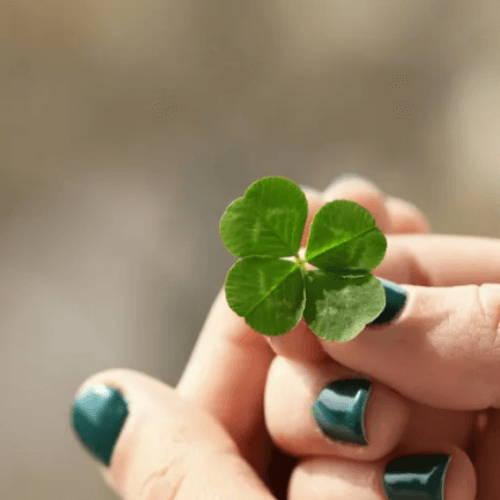 St.Patrick's Shamrock or Clover