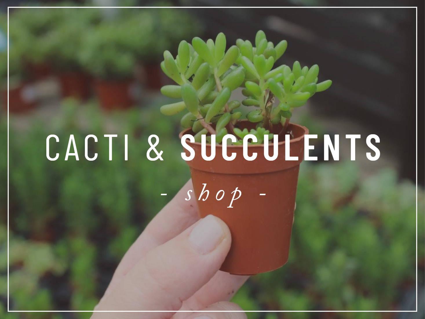 Shop Cacti & Succulents