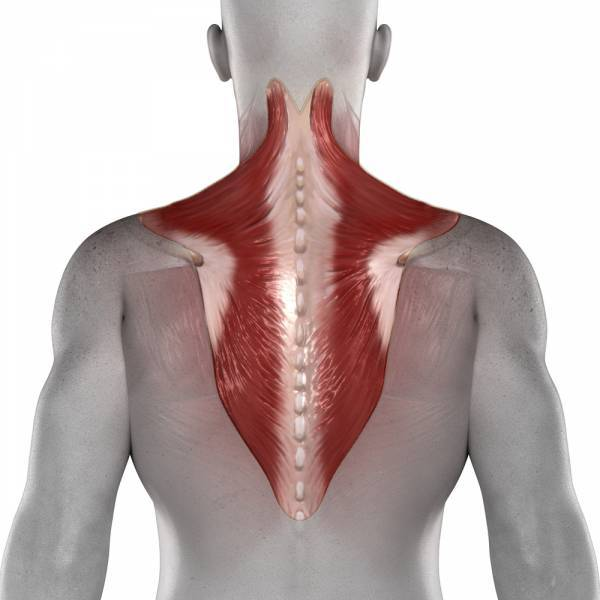 pureposture, posture, spinal alignment, trapezius, traps