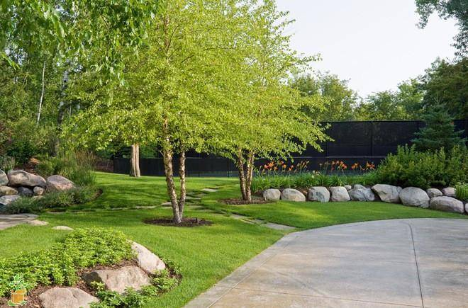What are the Most Heat Tolerant Shade Trees?