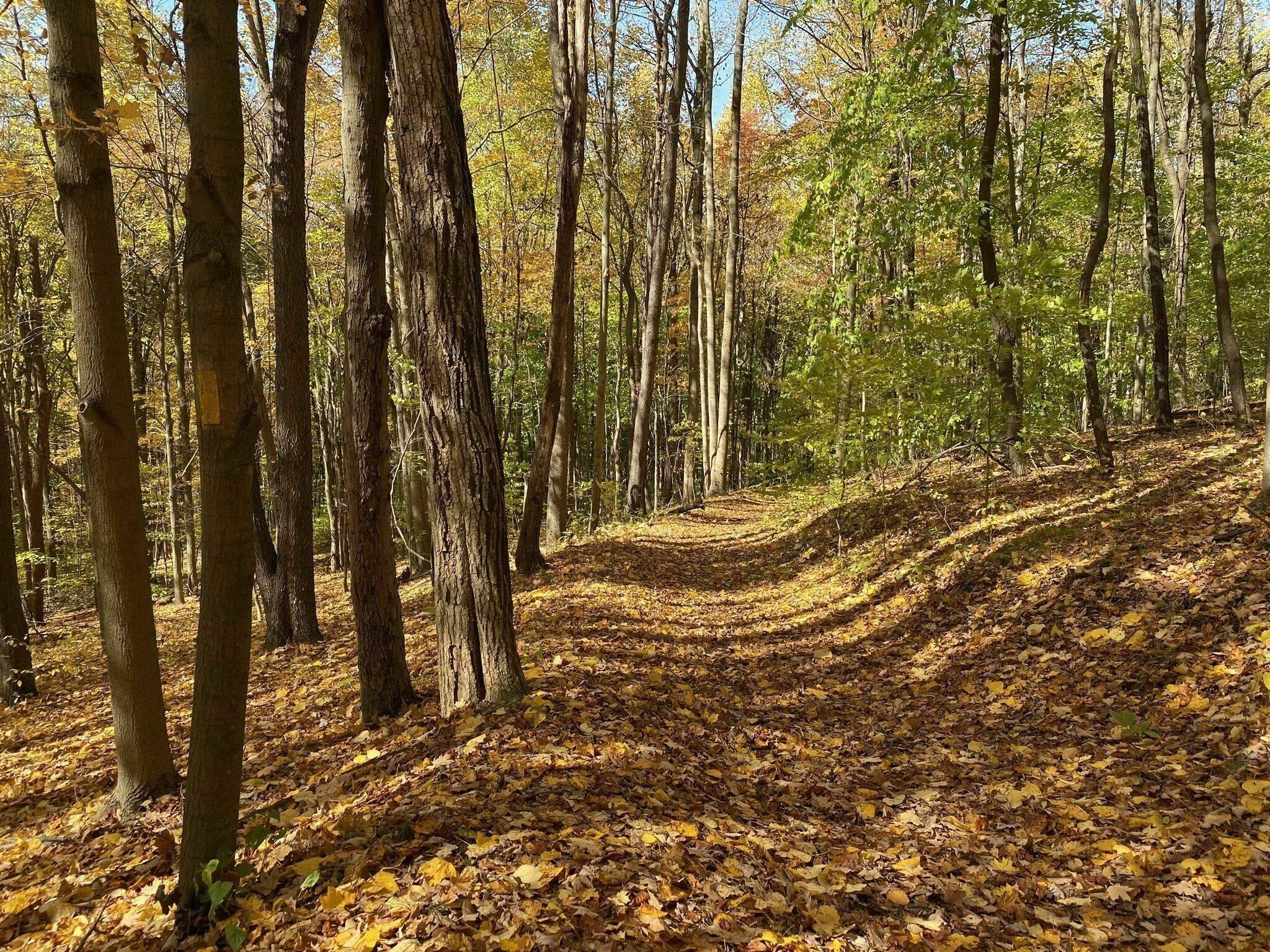 Kentuck Trail in Ohiopyle State Park Ohioplye, PA