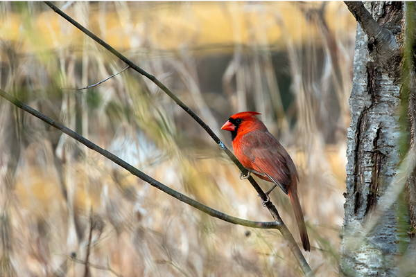 22 Trees and Shrubs to Attract Birds