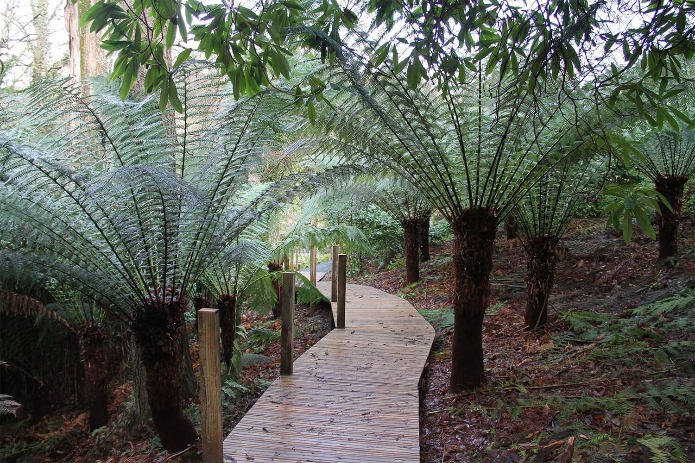 Jungle Boardwalk With Non-Slip Decking