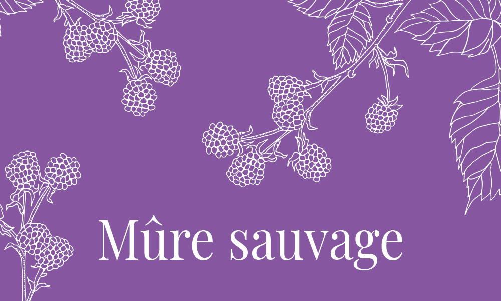 Image de la gamme Mûre sauvage de la collection Femme Dans un Jardin
