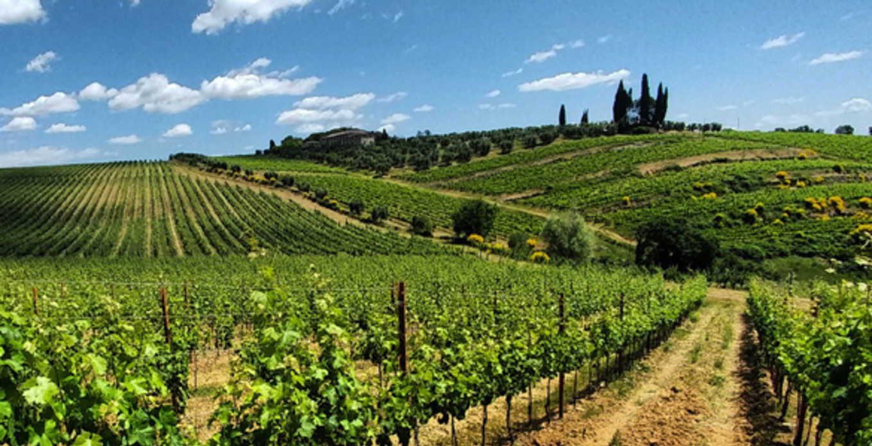 Vallepicciola Vineyards -- Italian Wine distributed by Beviamo International in Houston, TX