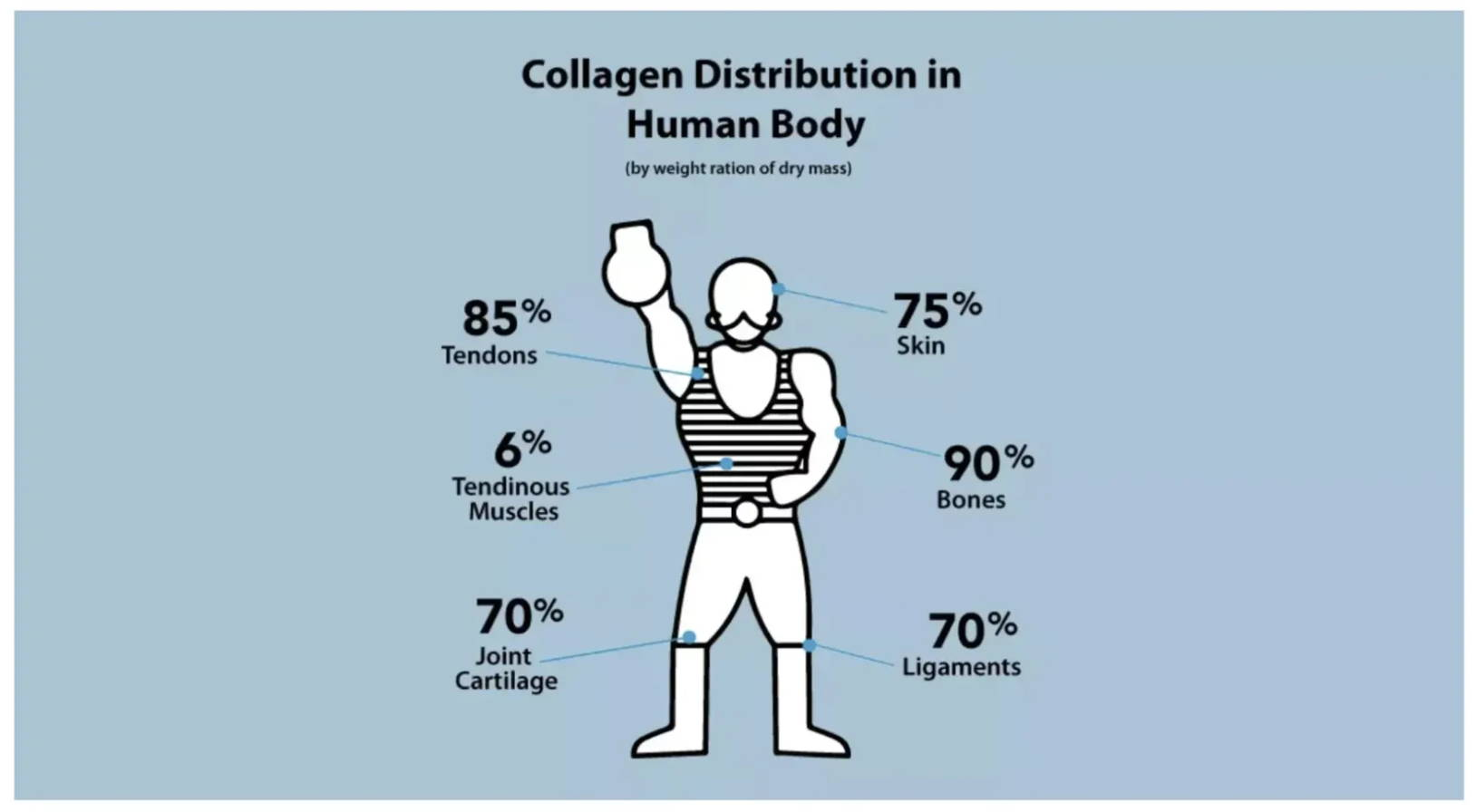Amandean Collagen Distribution in the human body