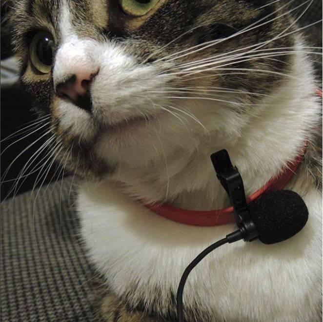 Cat wearing deadcat windscreen