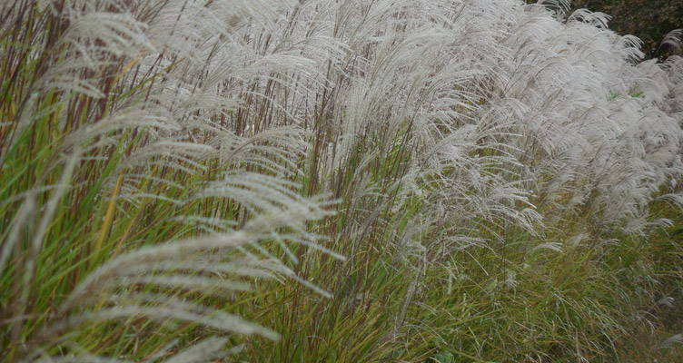 Magic Of Waving Grasses