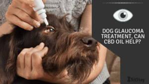 Dog Glaucoma Treatment, Can CBD oil help