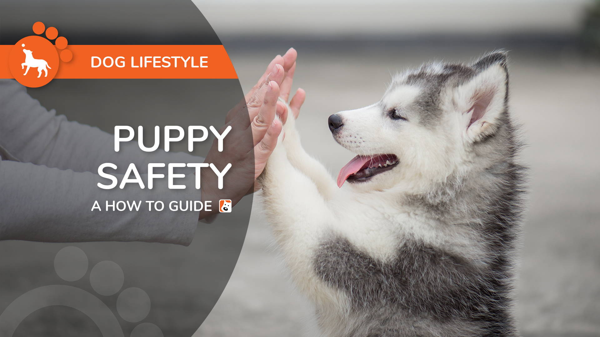 Puppy Safety Guide