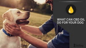 What Can CBD Oil Do For Your Dog