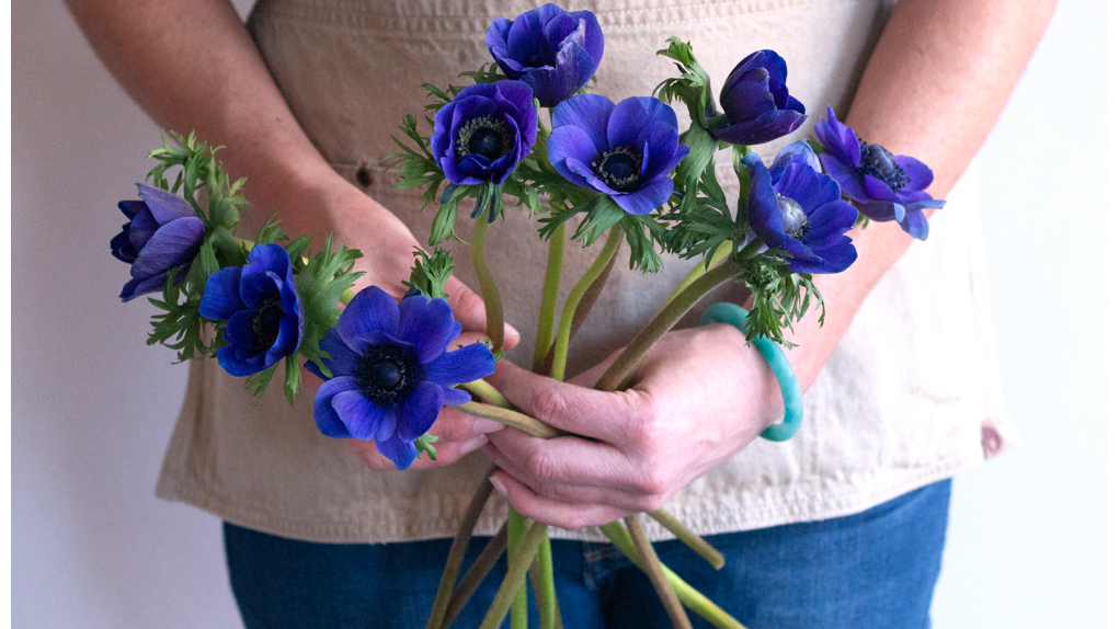 Blue indigo anemone flower