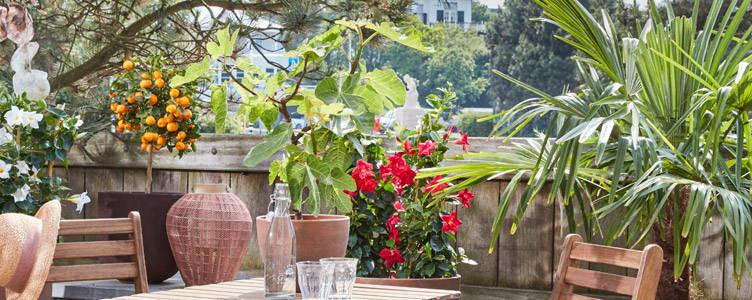 7 easy tips for creating a Mediterranean garden, patio or balcony