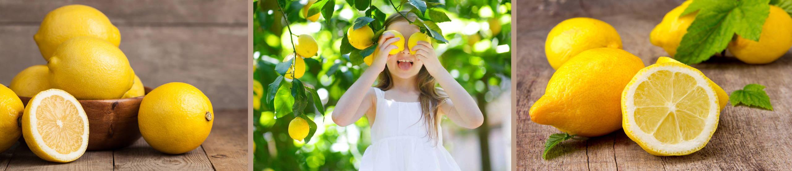 Meyer Lemon Banner