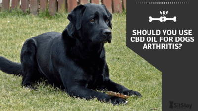 Should you use CBD oil for dogs arthritis