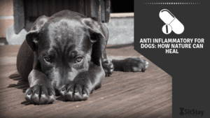 Anti-Inflammatory for Dogs: How Nature Can Heal