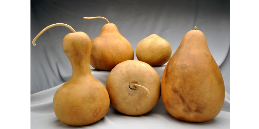 Bargain Boxed Gourds Shapes Reference