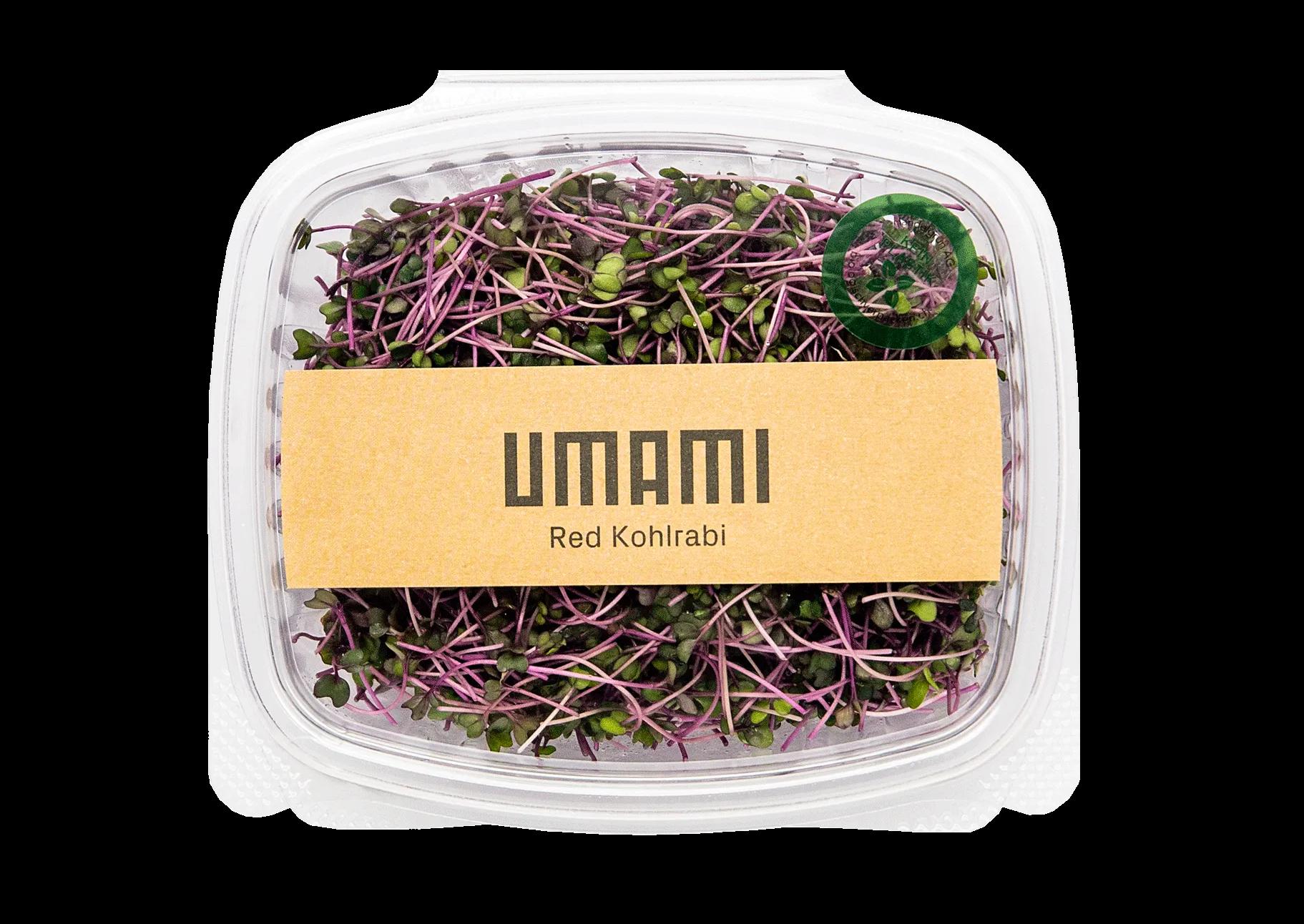 Kohlrabi Microgreens UMAMI Urban Farming Schweiz