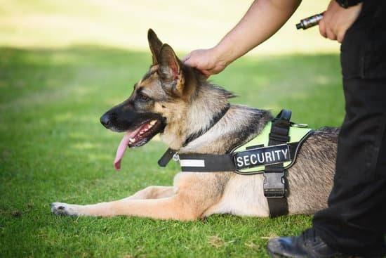 The Three Best Police Dog Breeds