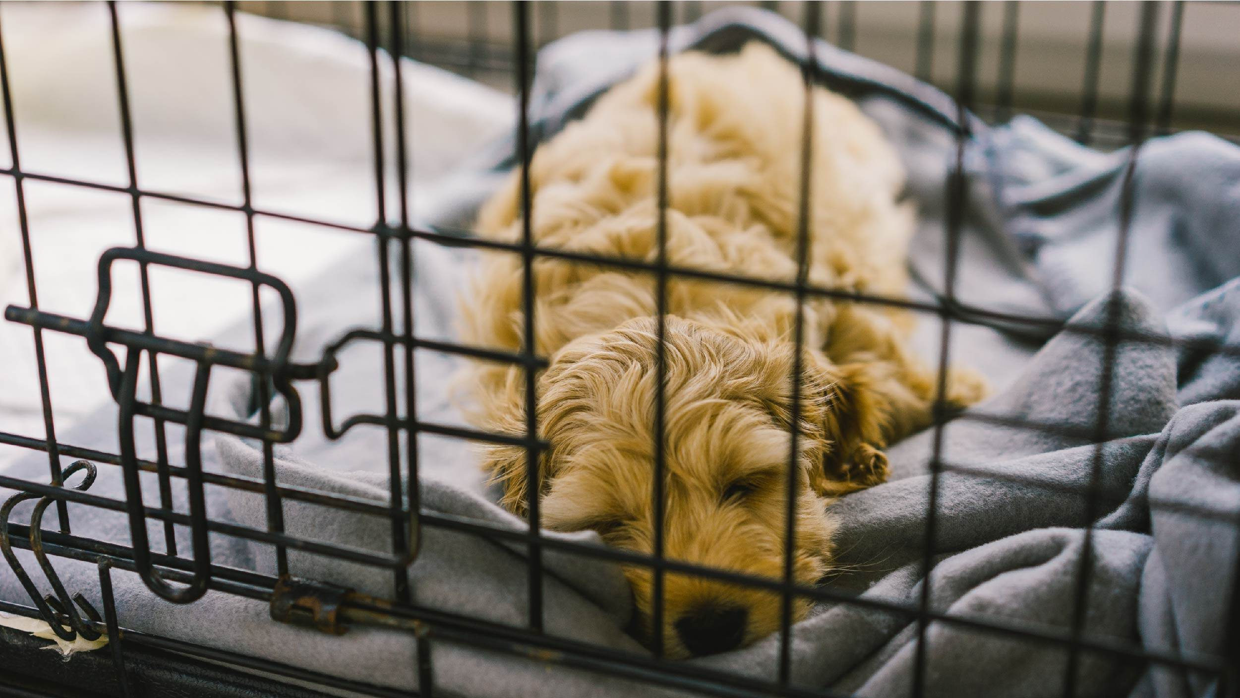 Dog dislikes being crate