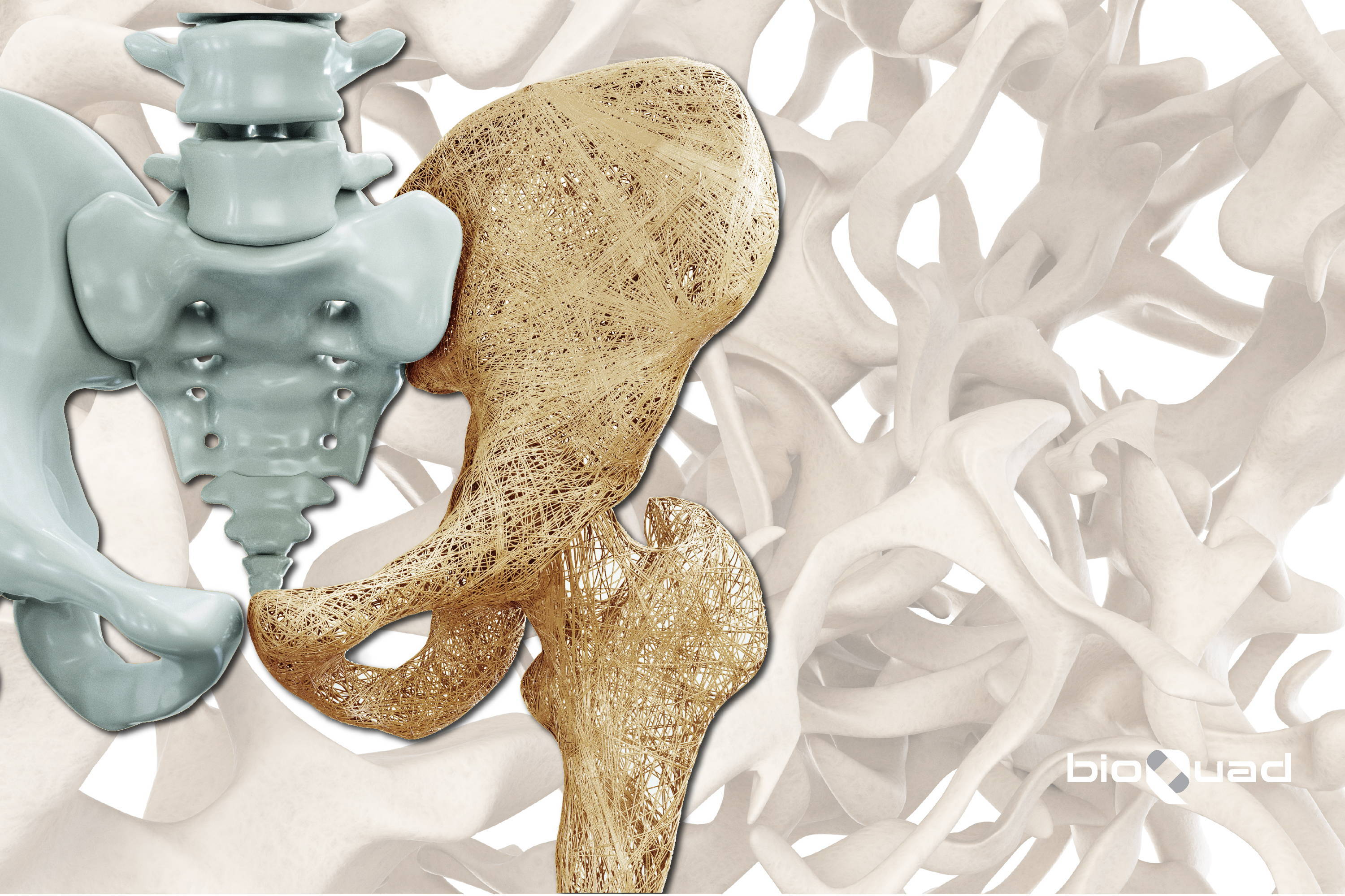 hip bone with bone matrix background