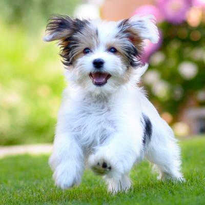 Cute Puppy | Bone Idol Puppy Guide | Getting A New Puppy
