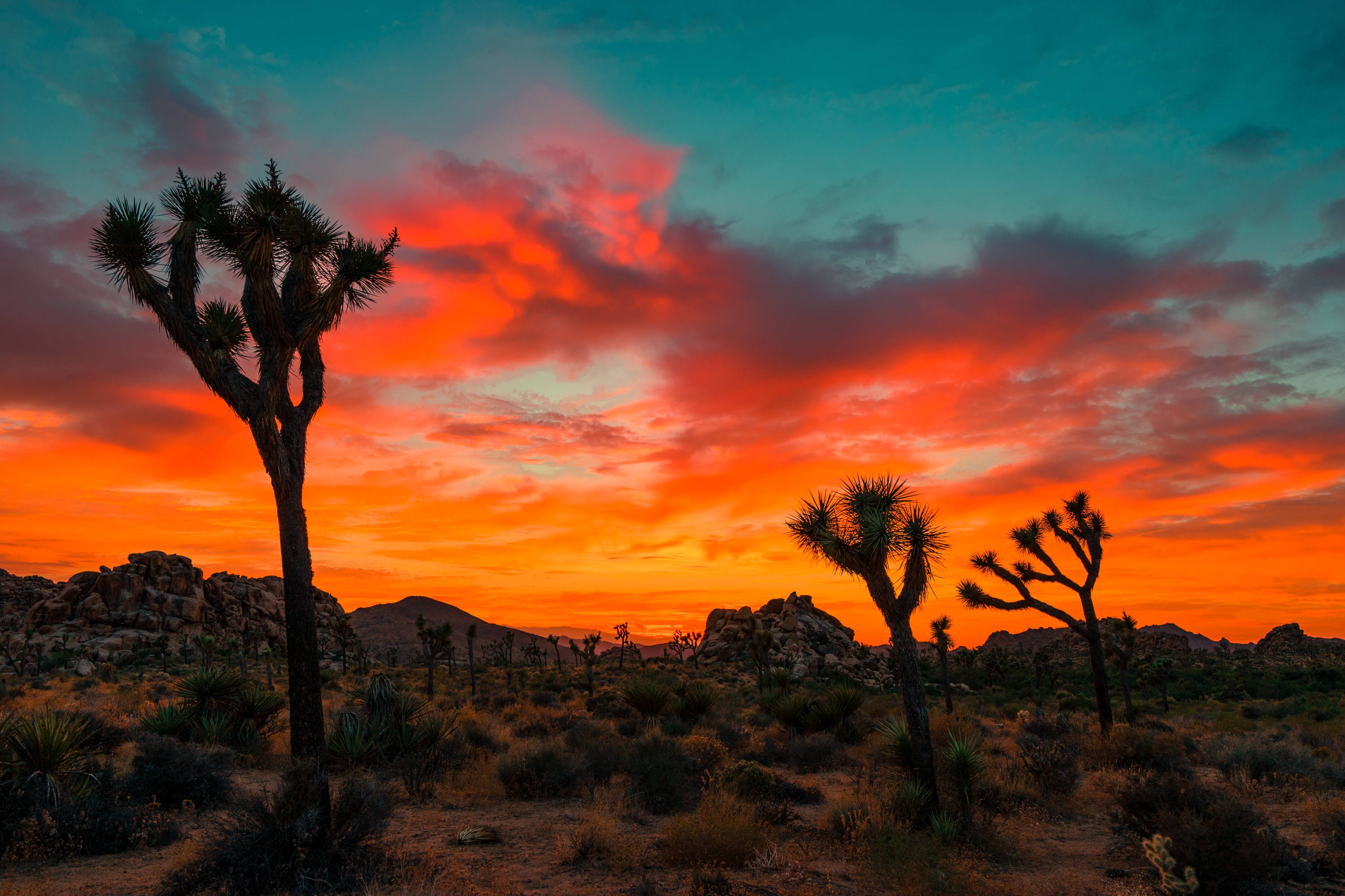Best National Parks to Visit in Winter: Orange, red, and blue sky hovers over cacti in Joshua Tree National Park - one of the best national parks in California.