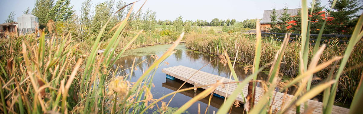 permaculture property with pond and grasses in the forground