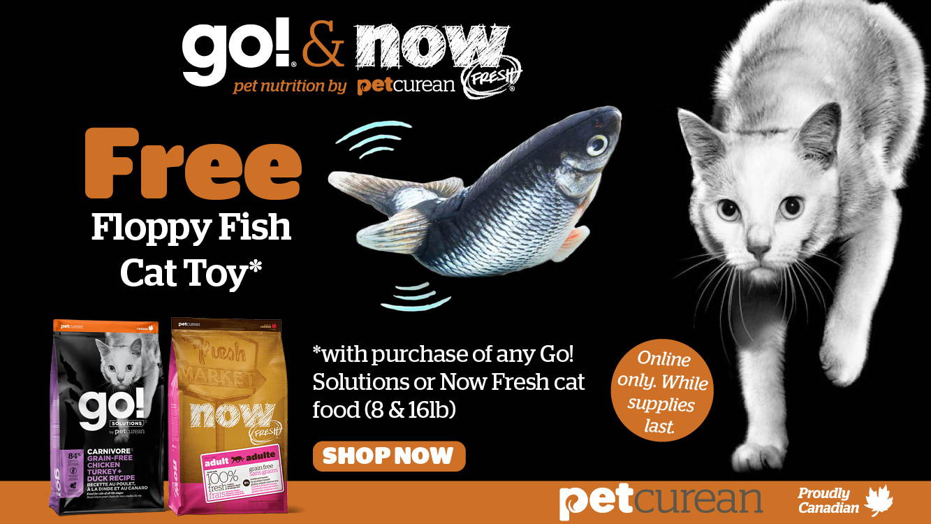 Free Floppy Fish Cat Toy with purchase of any Go! Solutions or Now Fresh cat food (8 & 16lb)