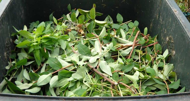 Come realizzare il terriccio vegetale compost