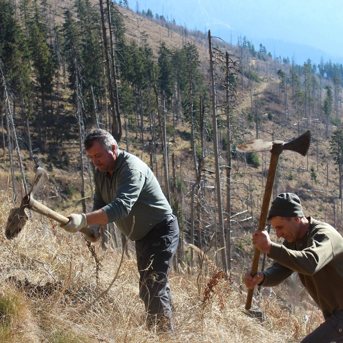 Two men planting trees in the Southern Carpathian mountains