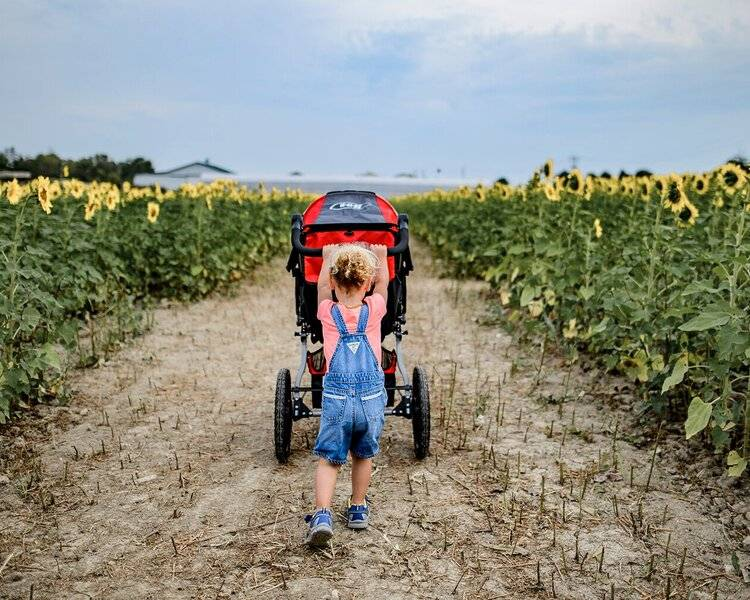 A child pushing a BOB Revolution Flex 3.0  stroller through a field of sunflowers.
