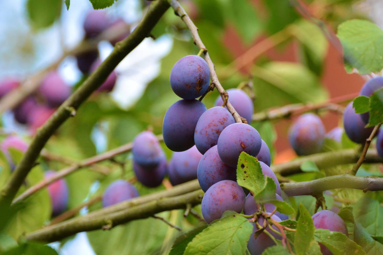 BRAND NEW SACK PLANTER//PLANT POT GARDEN ORNAMENT ROBIN OR BLUE TIT