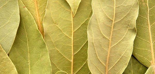 layers of dried bay leaf in a pattern showing off green and yellow colors