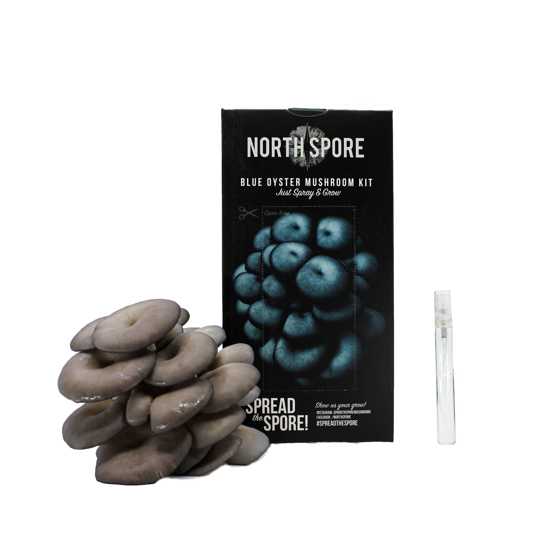 blue oyster spray and grow kit