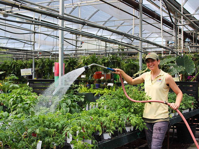 Image of employee in greenhouse.