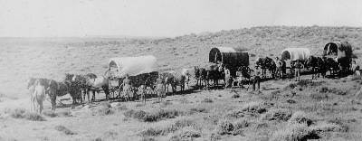 Covered Wagons being pulled by horses and mules