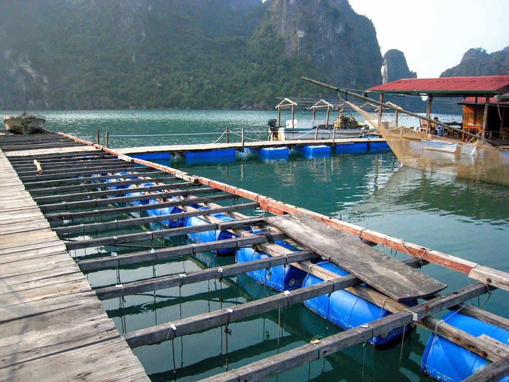 Vietnam Akoya Pearl Farm