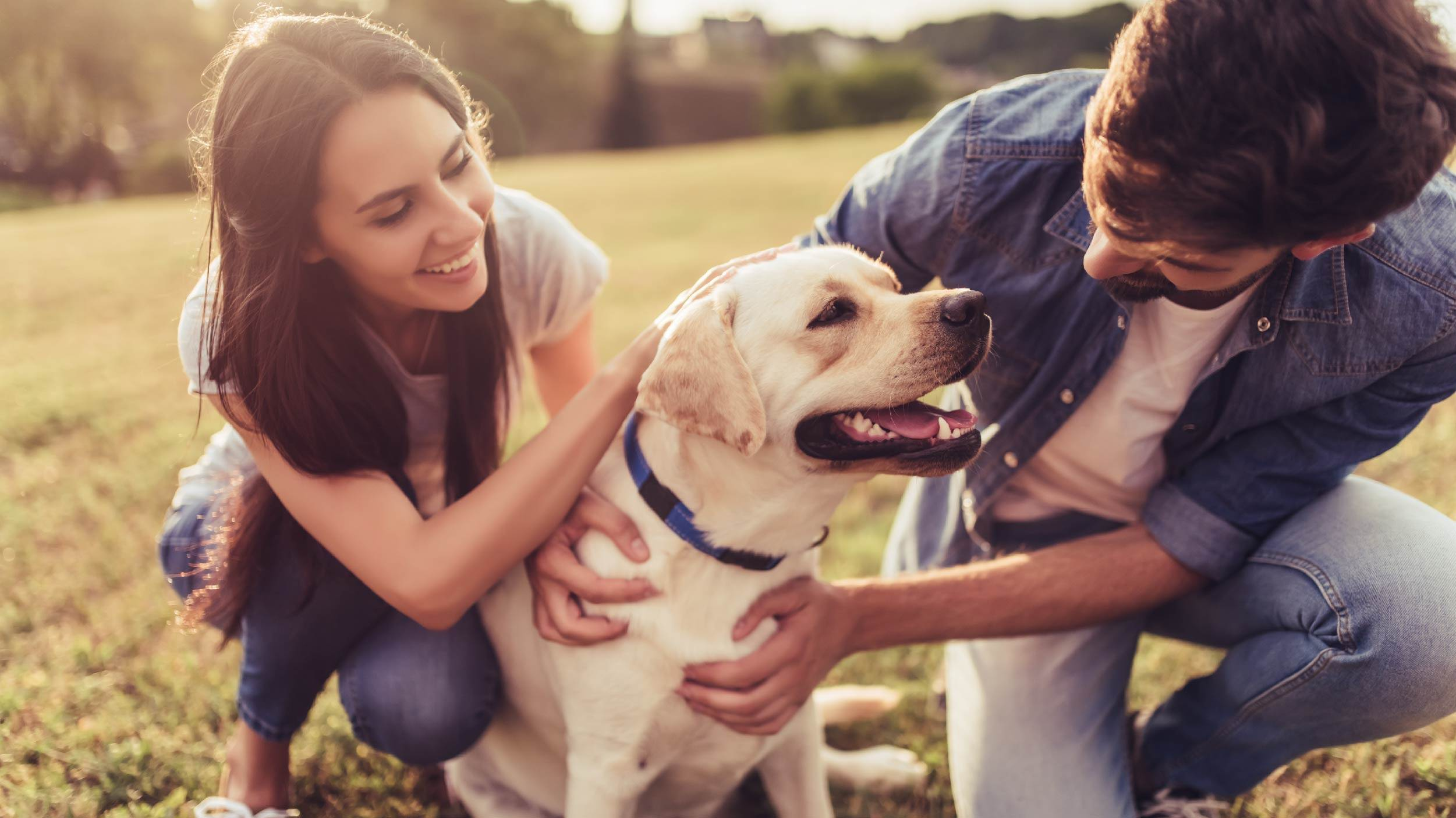 Why people give CBD to dogs