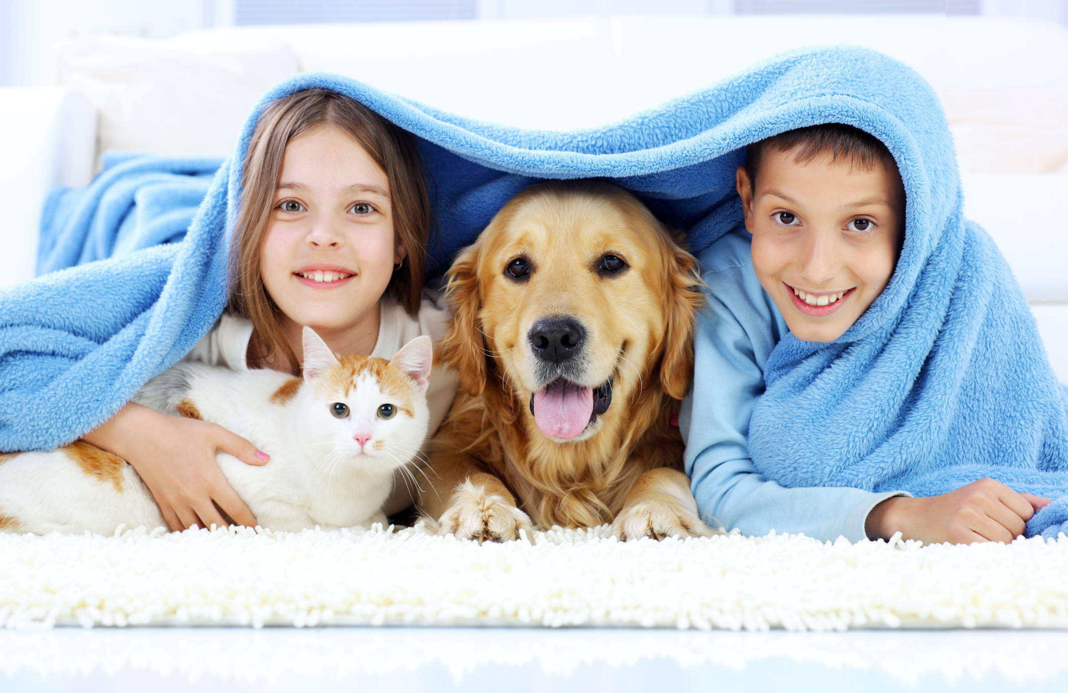 Advantages and Disadvantages to Having a Dog or Cat