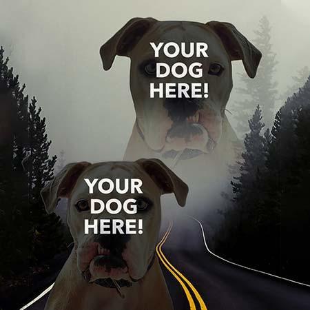 Super Portrait of pitbull on road
