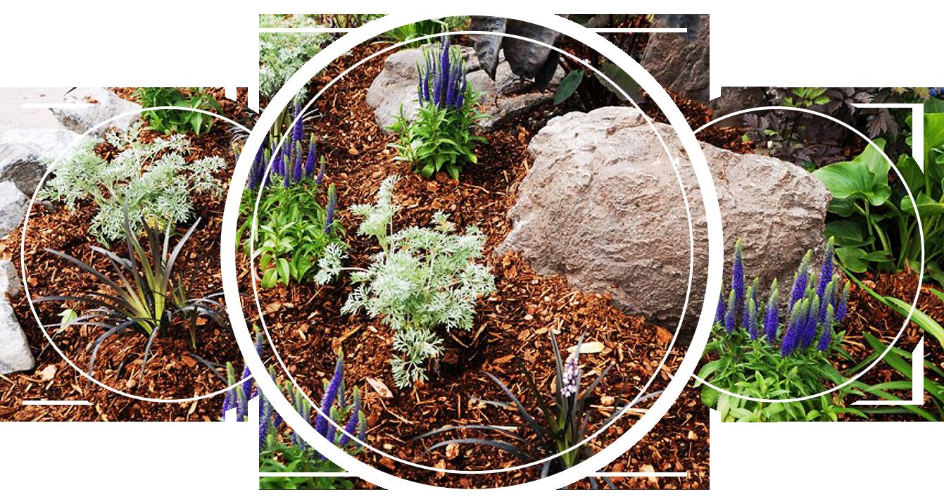 Garden with woodchips as mulch