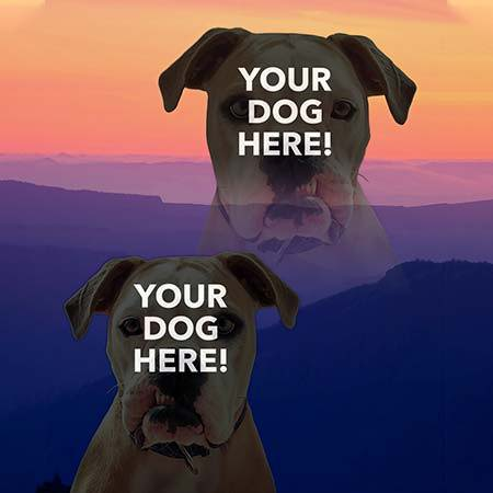 Super Portrait of pitbull on sunset mountains