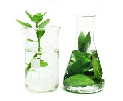 Plants in vials of water extracting chlorophyll
