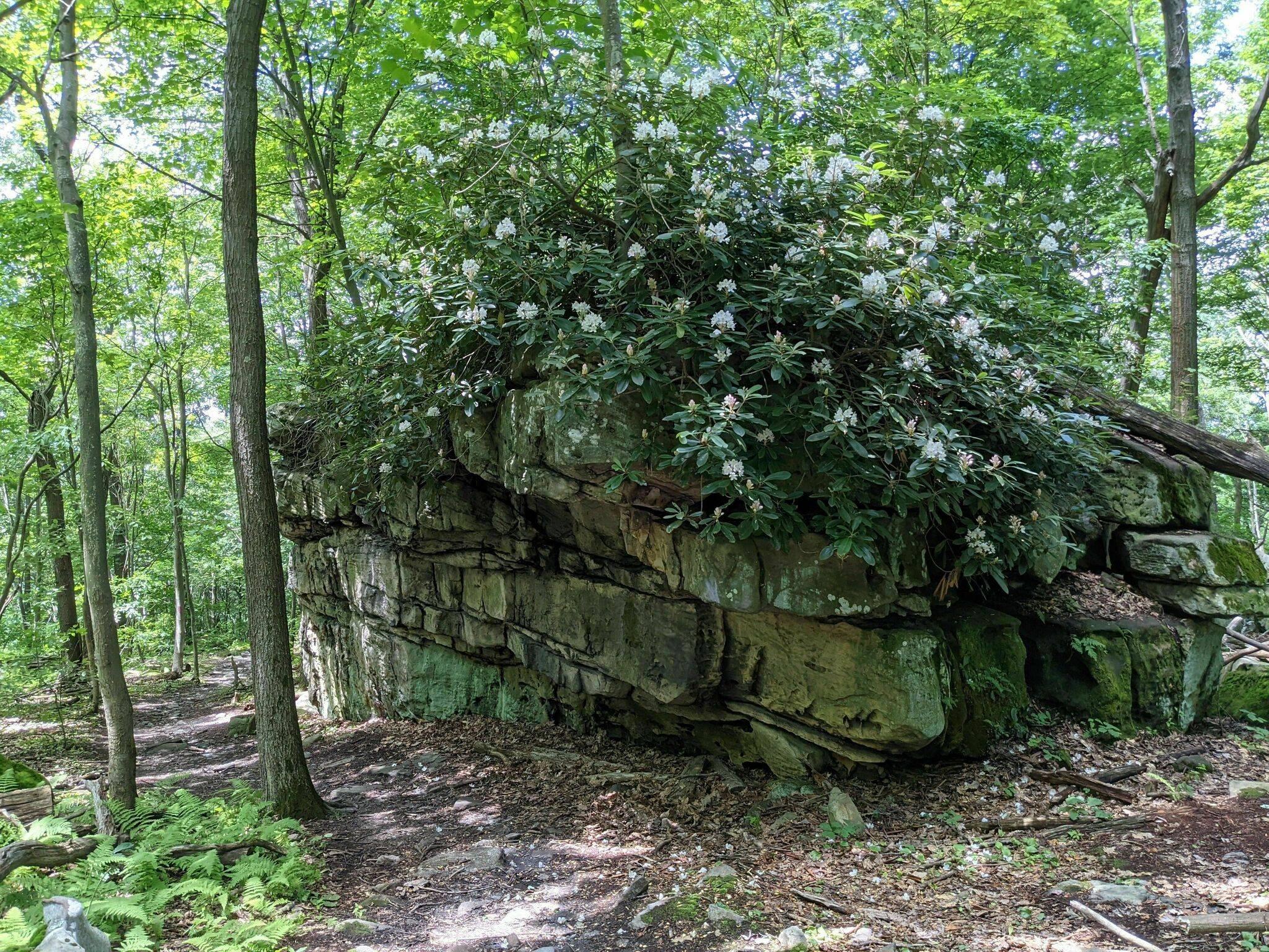 McCune Trail in Ohiopyle State Park, Ohiopyle, PA