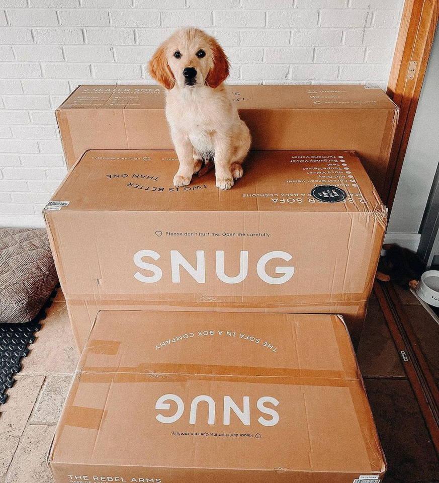 Snug Sofas are pet friendly