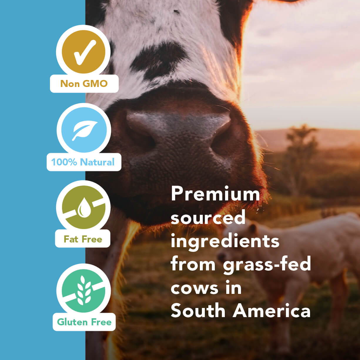 Grass-Fed Collagen Peptides Powder 30-Day Supply