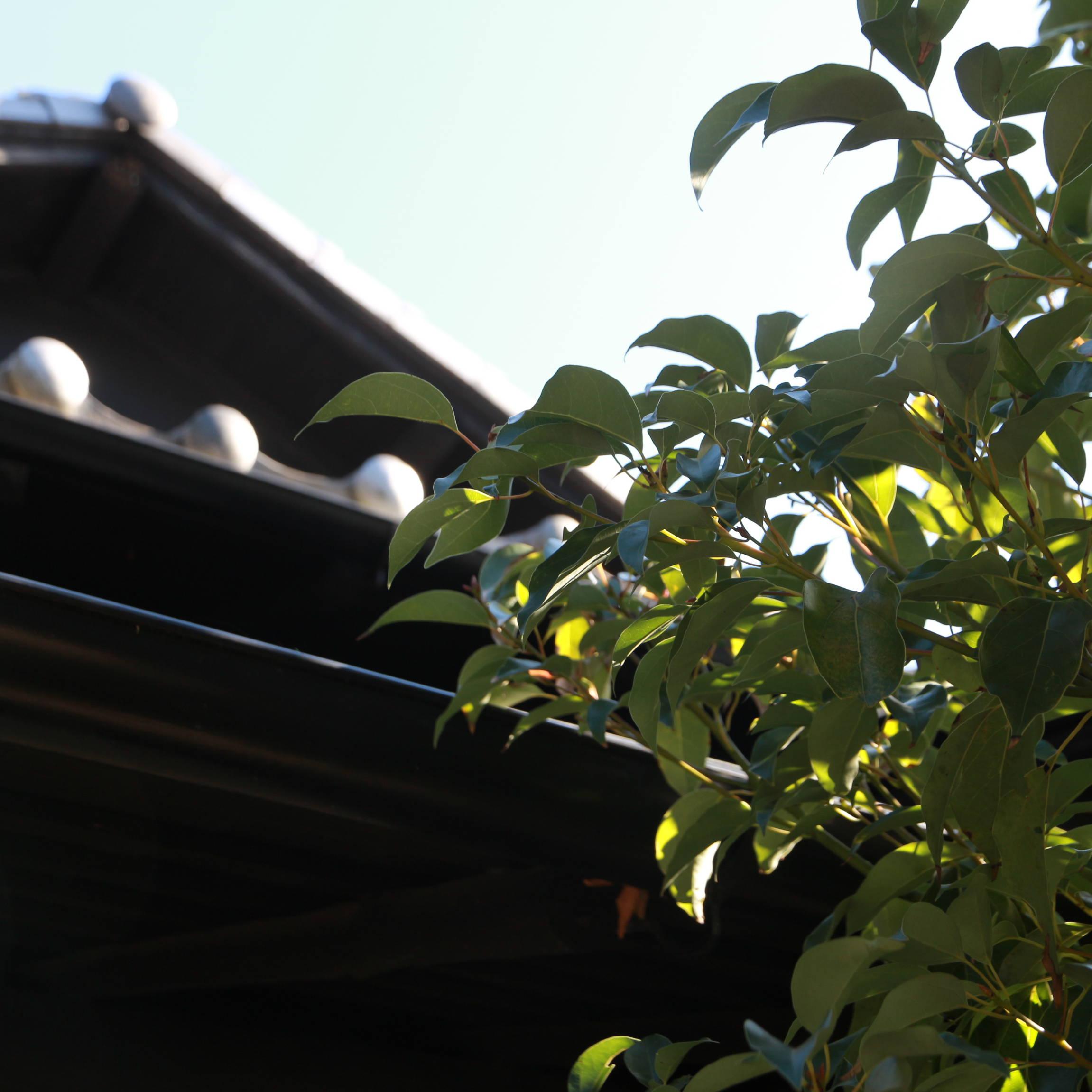 【SEE THE SUN】#01「食べること」からつくる私のライフスタイル